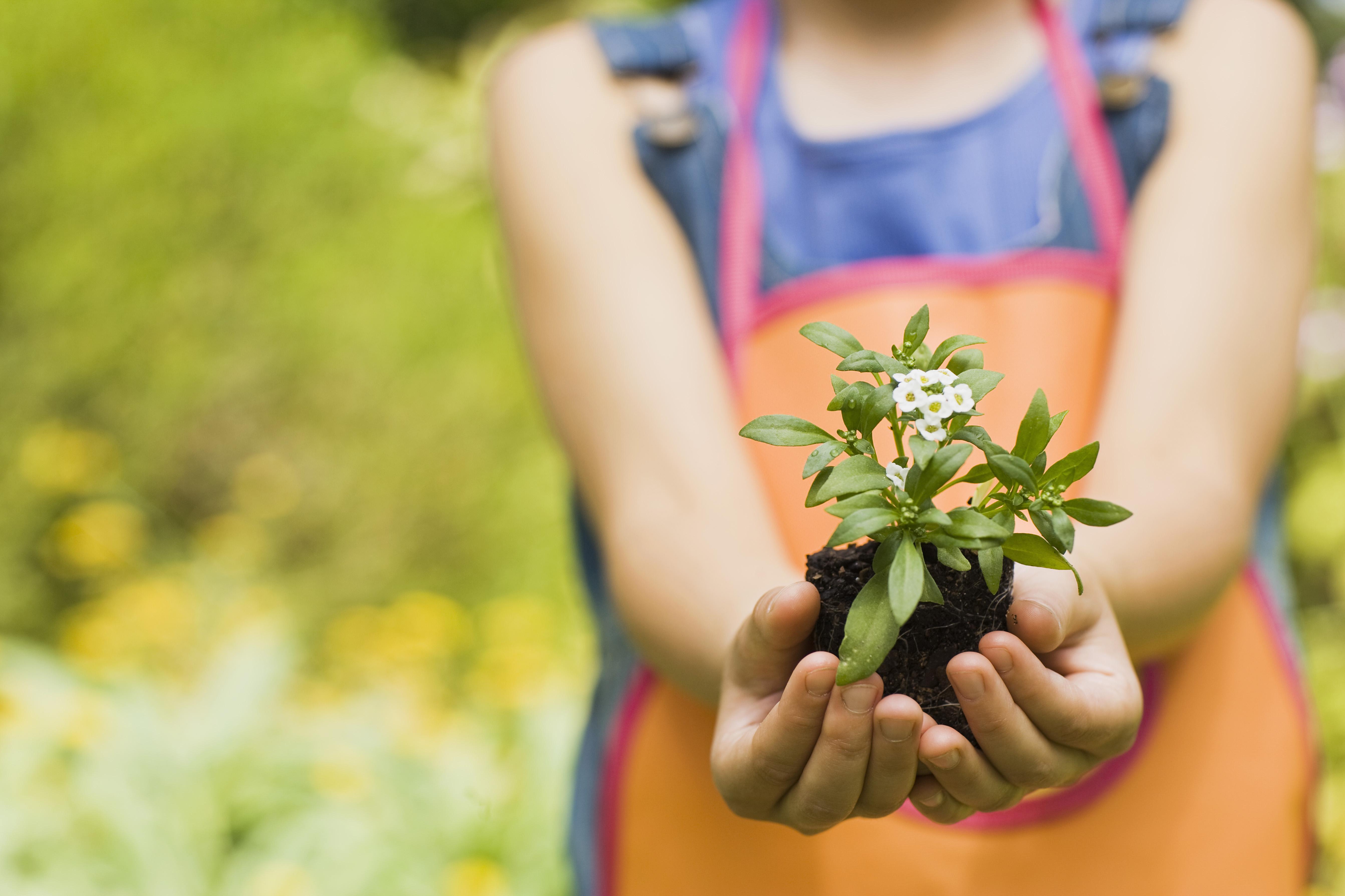 Gardening jobs for June Peard