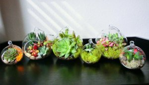 Decorate-Your-Home-with-Charming-Little-Terrariums-4-630x360
